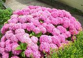 Au minimum 350 fleurs