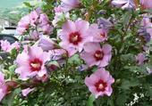 Un chemin bordé de fleurs