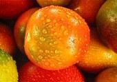 Tomates fraiches