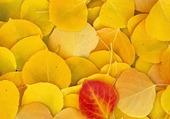 Feuilles jaune