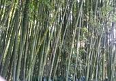 Puzzle bambous à barcelone