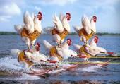 Chicken ...