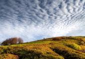 Les moutons dans le ciel