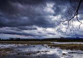 Sous un ciel d'orage