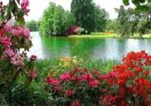 Bord de rivière fleuri