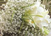 Superbe bouquet blanc