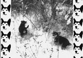 Les chiwawa dans la neige