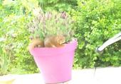 écureuil roux dans lavande papillon
