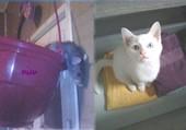 Puzzle Rat et le chat