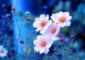 Petites fleurs sur fond bleu