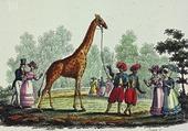 Puzzle la girafe du roi
