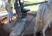 Puzzle Moulin à traction animale