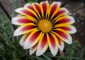 superbe fleur