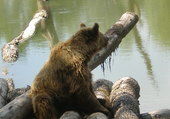 ours se prélassant au soleil