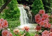 Cascade et fleurs