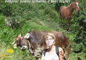 le cheval et la vache