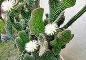 jolie plante