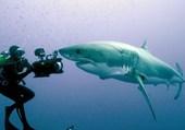 Puzzle Face au gros requin blanc