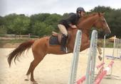 Enchaînement de sauts sur 6 obstacles