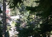 Cascade dans les bois