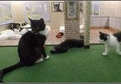 Puzzle La maison des chats