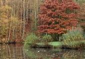 Voici l'automne