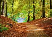 Les feuilles tombent