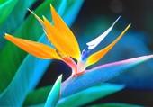 fleur exotique