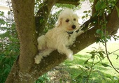 adorable petit chien