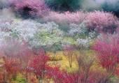 Sakura Valley par Lín Míng Rén