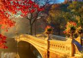 Petit pont dans le parc