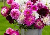 Jolie potée de fleurs