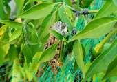 Papillon caché
