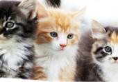 jolis et adorables petits chats
