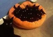 un panier de chats