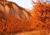 Puzzle l'automne