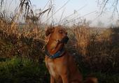 mon chien pose