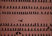 oiseaux la nuit