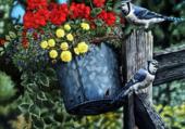 oiseaux heureux