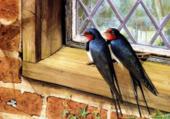 oiseaux sur la fenêtre