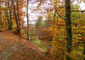 Puzzle la beauté de l'automne