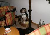 Benji a trouvé son nid