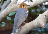 oiseau pensif sur la branche