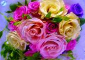 Joli bouquet coloré