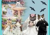 Puzzle le mariage des chats
