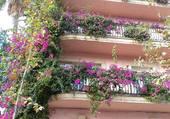 Balcon très fleuri à Cambrils