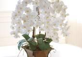 corbeille d'orchidées
