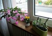 Puzzle Fenêtre fleurie