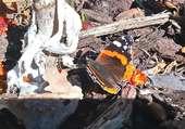 Vue de Papillon