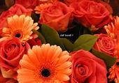 Gerbera et rose